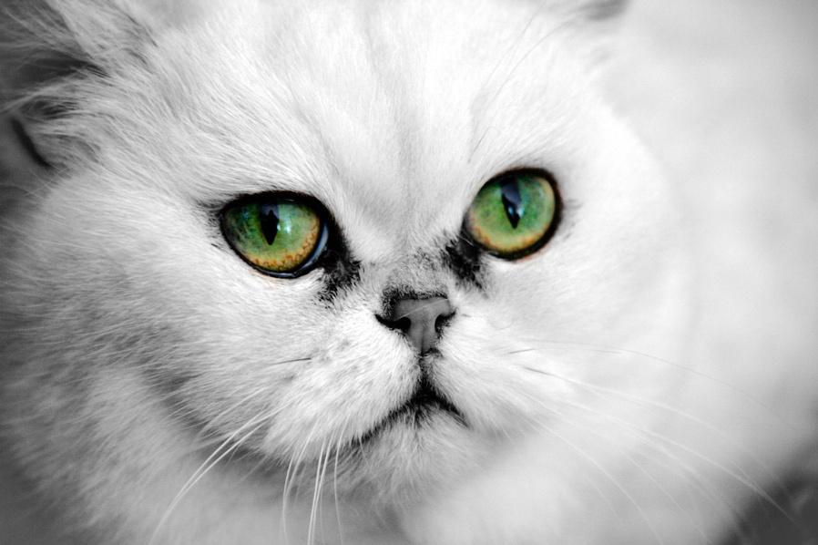 Beautiful eyes....