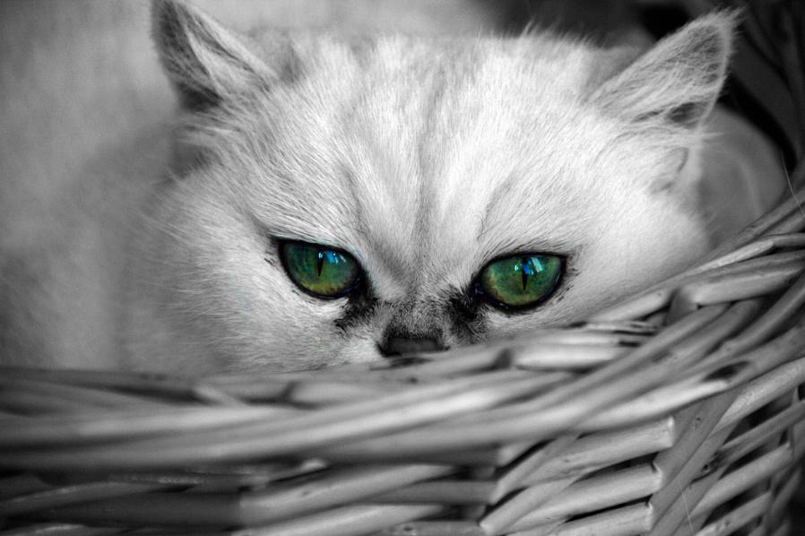 Eye eye...