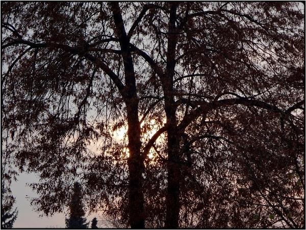 sunrise behind tree by FabioKeiner
