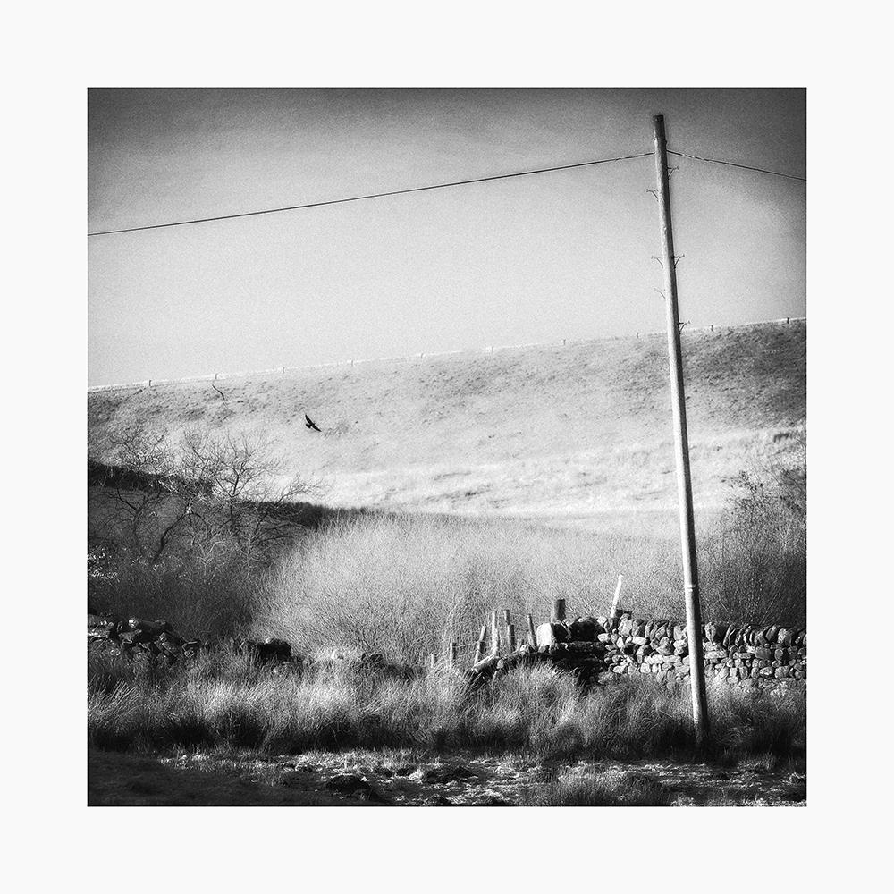 Crow, Balderhead reservoir.