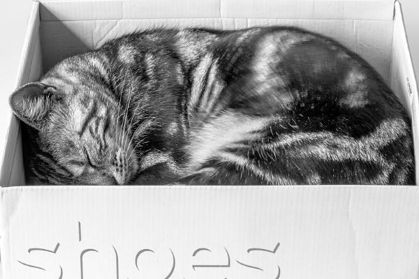 Kitten heels by flowerpower59
