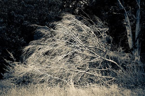 Woodland by AllistairK