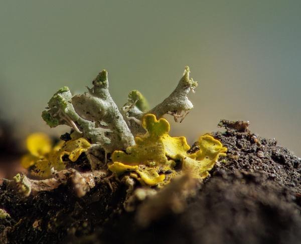 Lichen by Dave_Henderson
