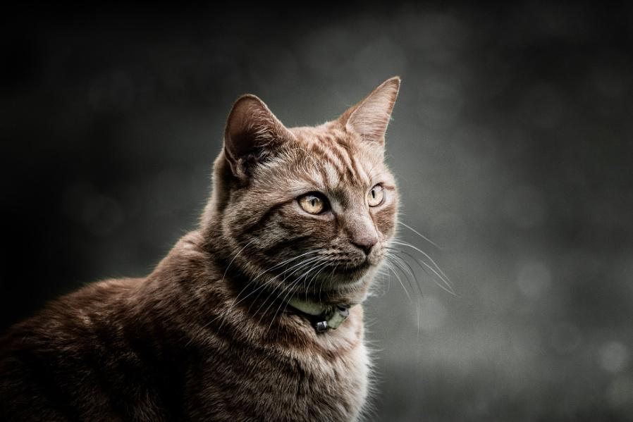 Ginger Cat - Moody 2