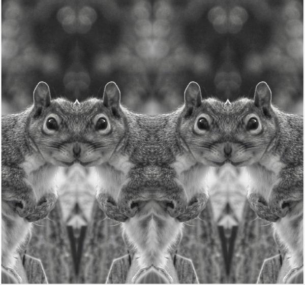 Squirrels galore by KrazyKA