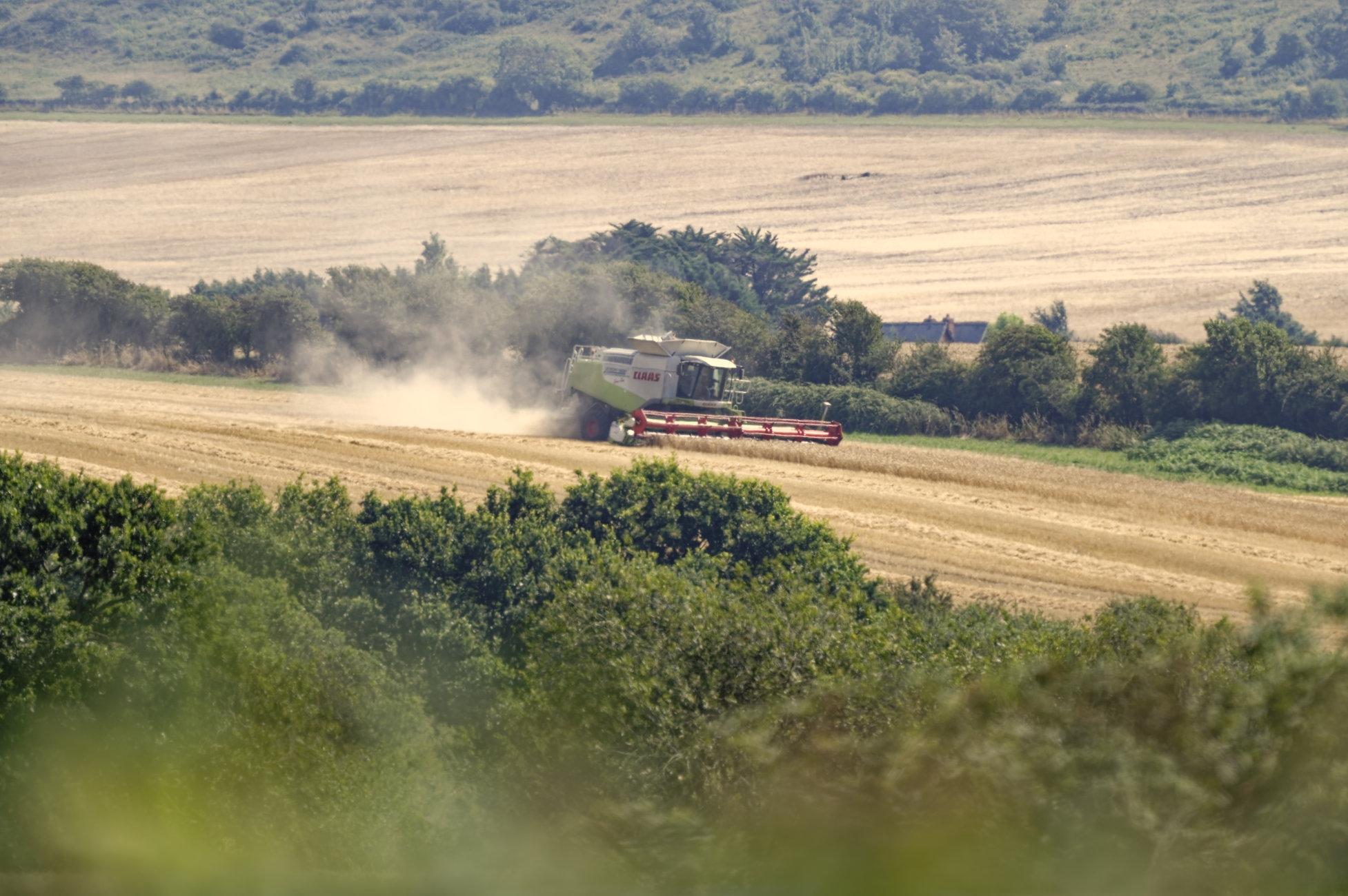 Barley harvest time.