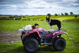 One Quad Bike and his Dog...