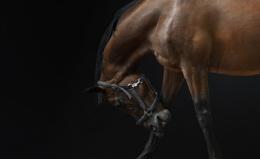 Horse 006