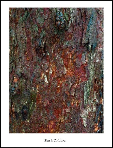 Bark Colours by tvhoward950