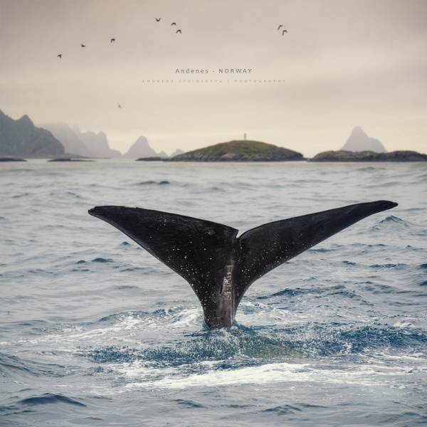 Whale Fin by A_Stridsberg