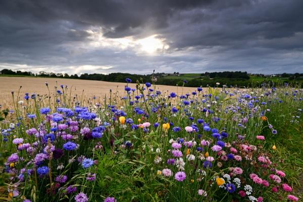 Wild flowers Derbyshire by RoyChilds