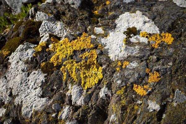 Lichen by nclark