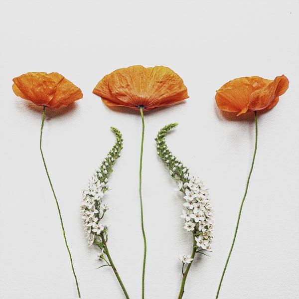 garden flowers in august by judidicks