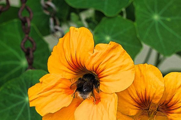 BEE & FLOWER by kojack