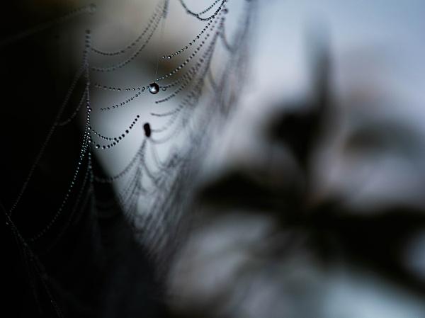 Web & Water II by kaybee