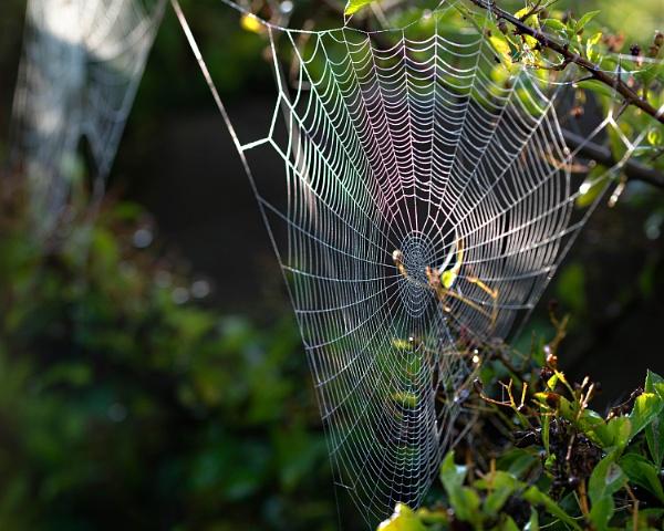 Web & Water III by kaybee