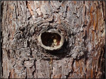 trunkhole