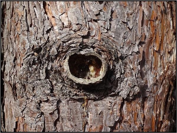 trunkhole by FabioKeiner