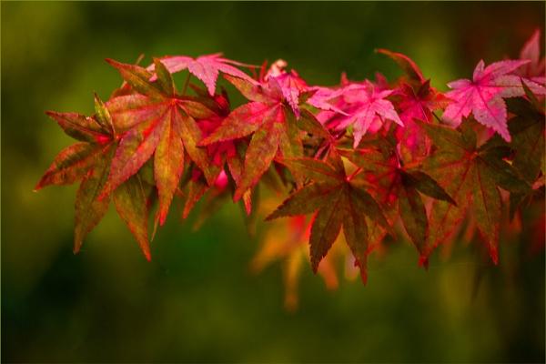 false autumnal... by estonian