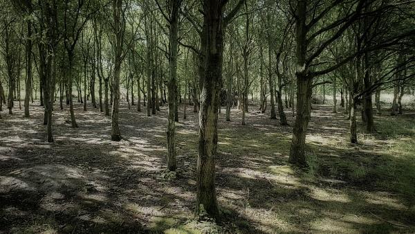 Tree Shadows by Les_Cornwell