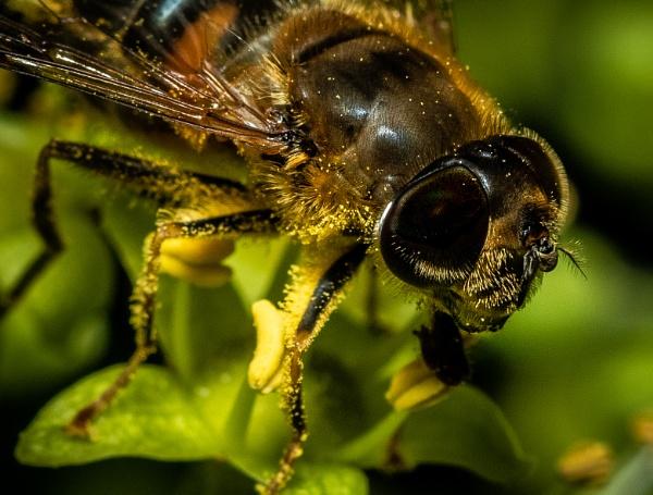 HoneyBee 7 by TornadoTys