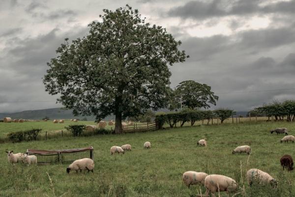 Pastoral symphony by BillRookery
