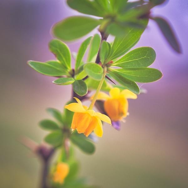 Little Flower by icipix