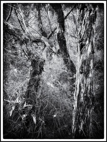 Tree Tangles by tvhoward950