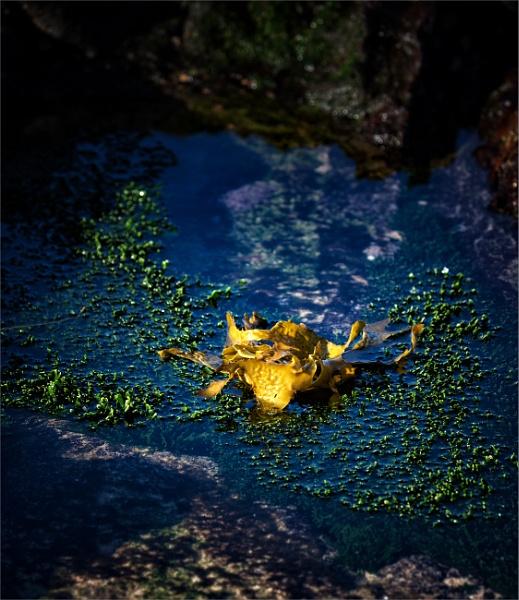 Golden Gem by tvhoward950