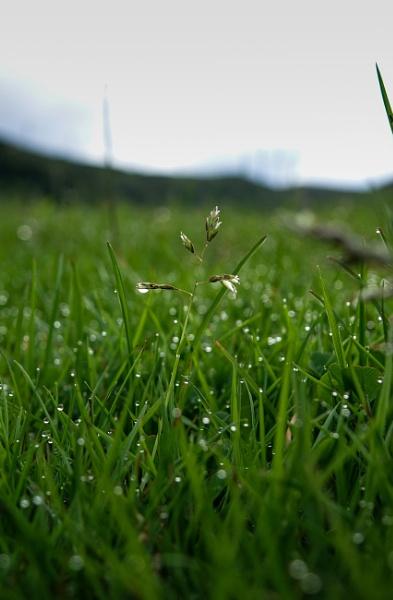 Morning Dew by CReid5