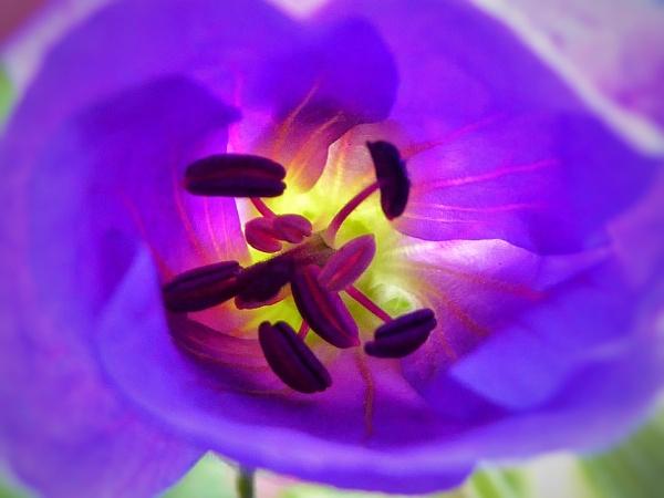 Geranium Whirlpool by ReynoldsPhotography