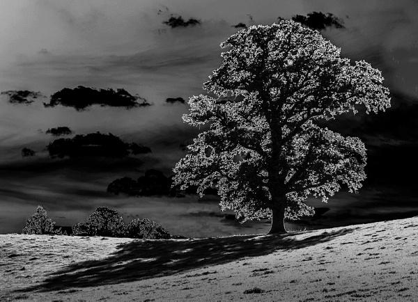 Oak by Moonlight by Knowlesie