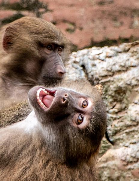 Monkey Business by Knowlesie