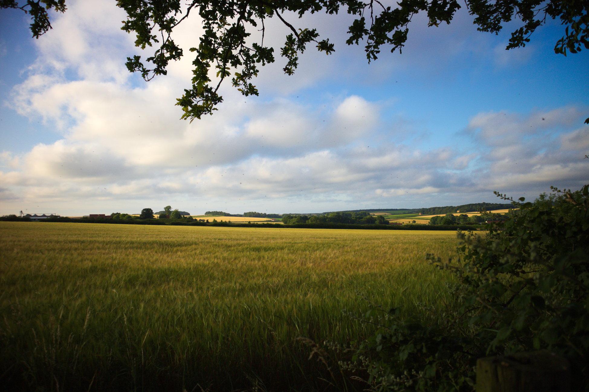 Northcreek fields Norfolk