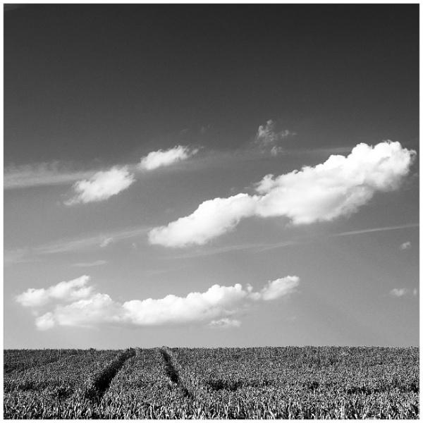 the field by bliba