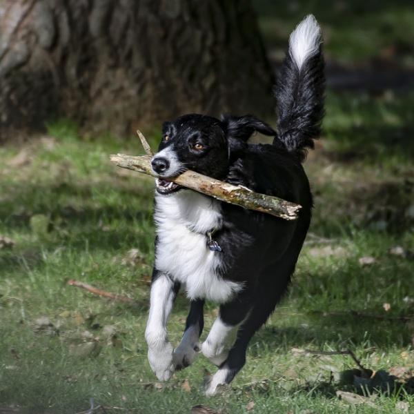 Fetch by chensuriashi