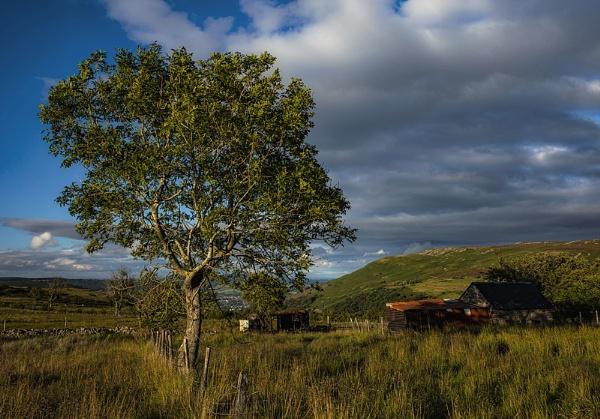 The Tree and the Rusty Barn by Buffalo_Tom