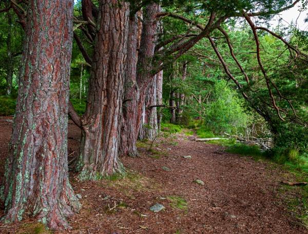 Woodland Walk by scrimmy