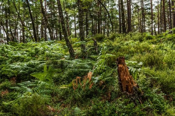 Woodland Walk 2 by scrimmy