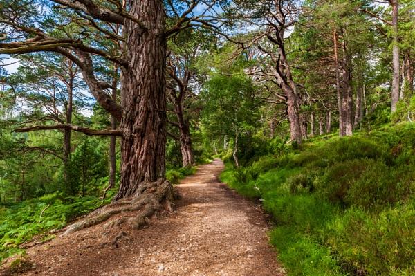 Woodland Walk 3 by scrimmy