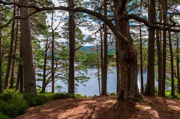 Woodland Walk 4 by scrimmy