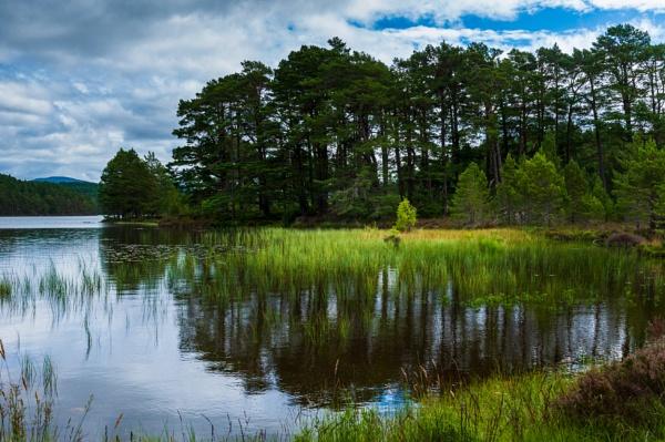Woodland Walk 5 by scrimmy