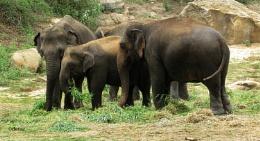 Kolkata # 62 Happy World Elephant Day 2020