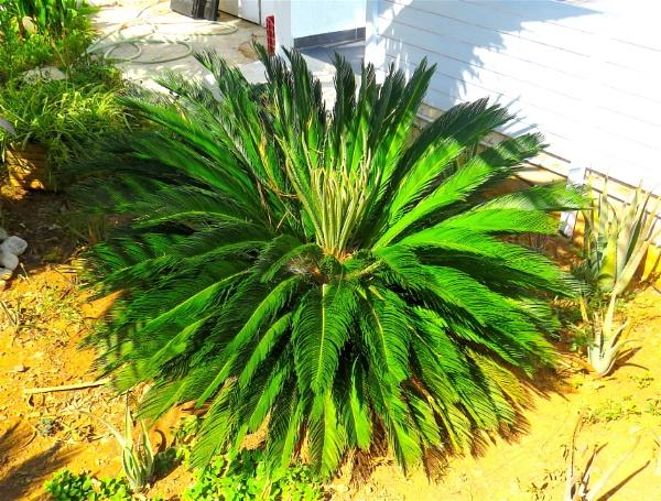 Feather plant by ddolfelin