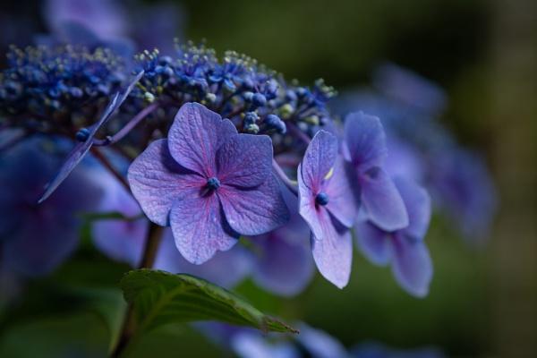 Blue by Fefe