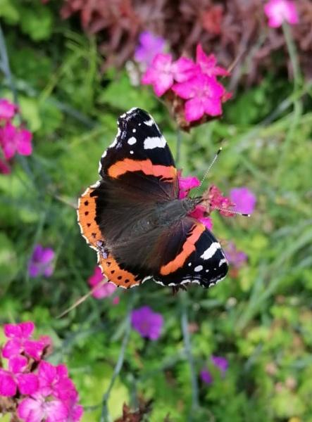 Butterfly by carol01
