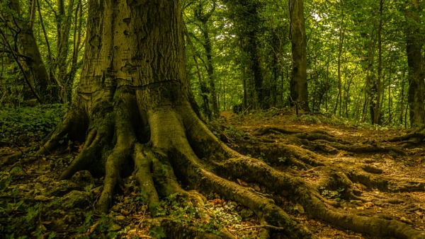 Old Roots by woodini254