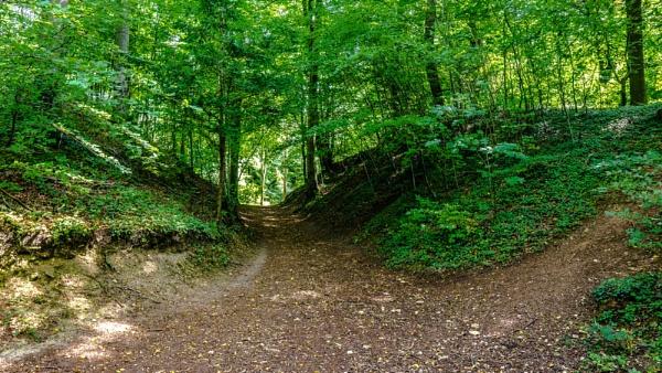 Woodland Scene by woodini254