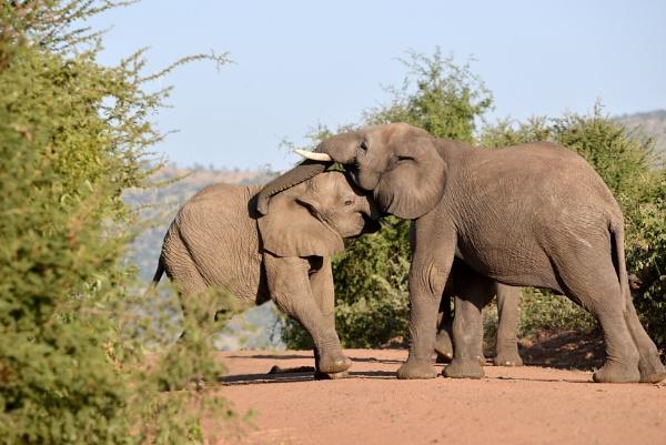 It is International Elephant day by Coen