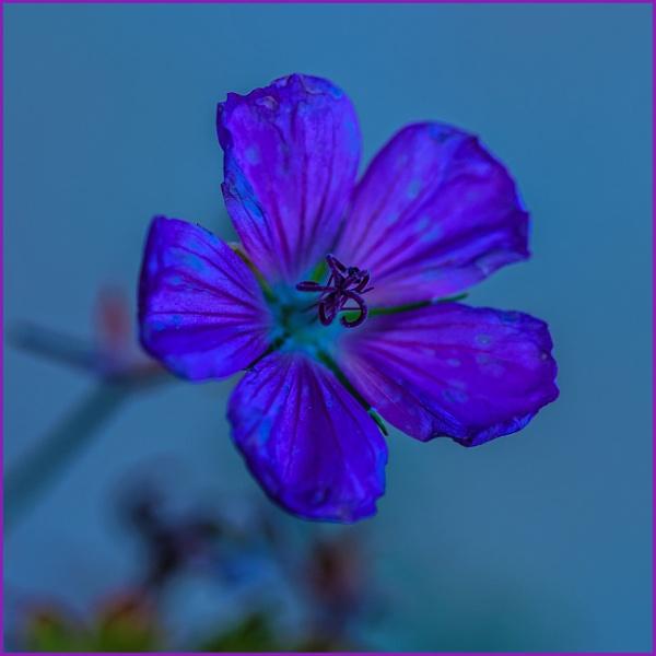 blue yonder... by estonian